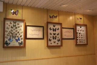 معرفی باغ موزه پروانه ها اصفهان