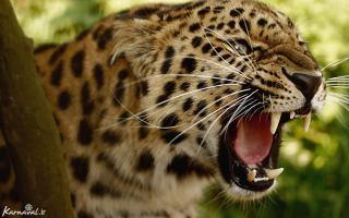 خطرناک ترین حیوانات جنگل آمازون - جالب، جذاب و خواندنی